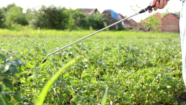 vidéos et rushes de fermier arrose les pommes de terre avec pulvérisateur, rangées de plantes fleurissant de pommes de terre - herbicide