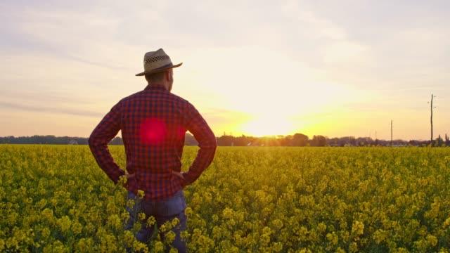stockvideo's en b-roll-footage met boer permanent rustige, idyllische, landelijke canola field bij zonsondergang, real-time - handen op de heupen