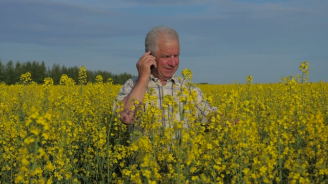 A farmer stands in a blooming yellow canola field and talking on the phone. video
