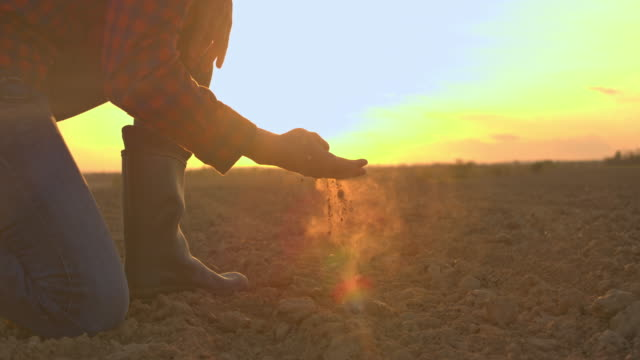 MS Farmer touching,examining dirt in rural plowed field at sunset Farmer touching,examining dirt in rural plowed field at sunset. Slow motion. dirt stock videos & royalty-free footage