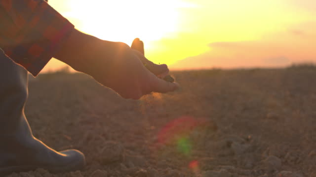 MS Farmer touching,examining dirt in rural plowed field at sunset