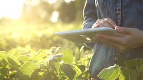 farmer utilizza un tablet computer su un campo di soia. rallentatore - agricoltura video stock e b–roll