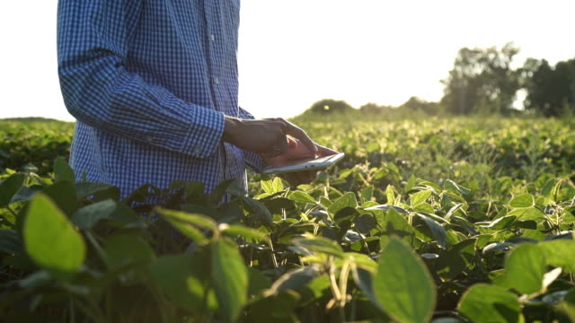 Farmer uses a tablet computer on a soy field video