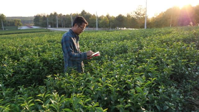 vídeos de stock, filmes e b-roll de agricultor usando dados de gravação de tablet digital na plantação de chá verde - plantação