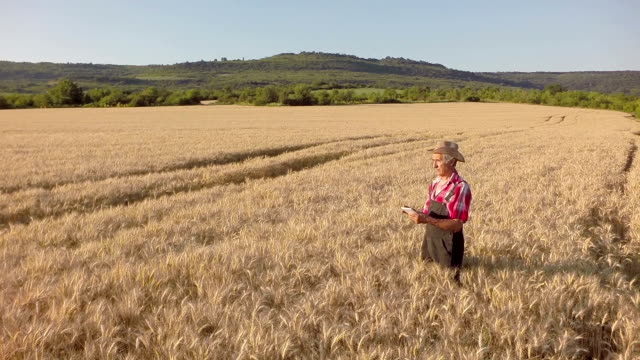 Farmer using digitale tablet video