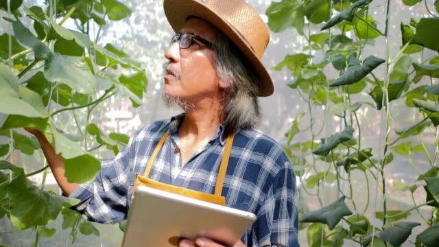 農家を監視する技術のタブレット コンピューターを使用して、制御および調整主導、雰囲気、湿度、水位と垂直または屋内農業の収穫の時間を追跡します。業界 4.0 - センサー点の映像素材/bロール