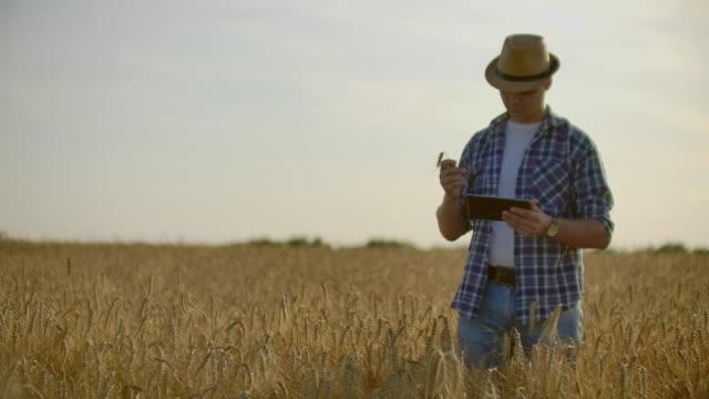çiftçi buğday tarlasında tablet kullanıyor. tarım teknolojisi ile alanında çalışan bilim adamı. buğday sapları tablet pc dokunmadan adam el yakın. agronomist buğday kulaklarını araştırıyor. - çavdar stok videoları ve detay görüntü çekimi