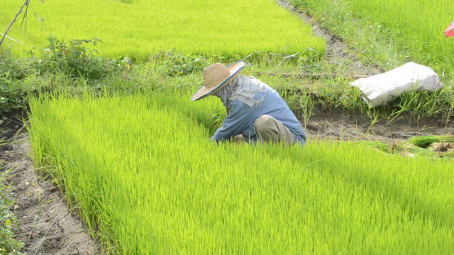 Farmer video