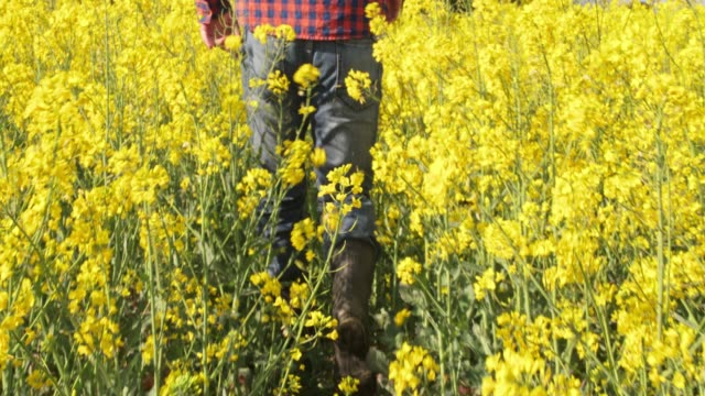 vídeos de stock e filmes b-roll de farmer walking in sunny,rural yellow canola field,slow motion - bota