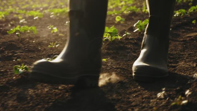vidéos et rushes de fermier marchant sur le domaine dans des bottes en caoutchouc, plan rapproché - bottes