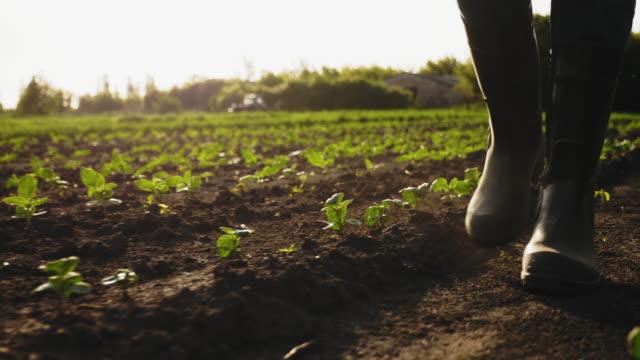 vídeos de stock, filmes e b-roll de fazendeiro andando no campo com botas de borracha - plantação