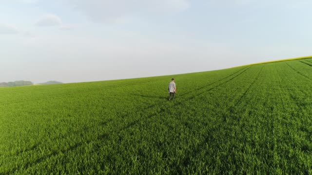 Farmer walking on wheat field checking wheat quality Farmer checkingwheat quality using digital tablet computer while walking on wheat field agriculture background. rancher stock videos & royalty-free footage