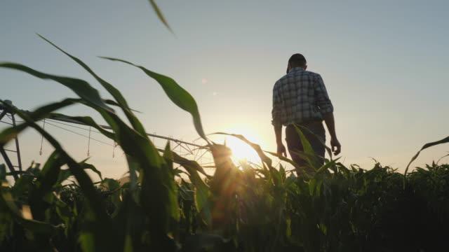 vidéos et rushes de fermier marchant par un champ de maïs au coucher du soleil - équipement agricole