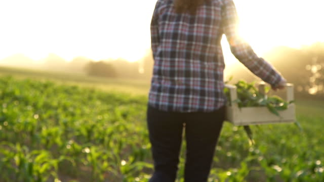 farmer walks the field carrying a box with green plants. . slow motion - sustainability video stock e b–roll