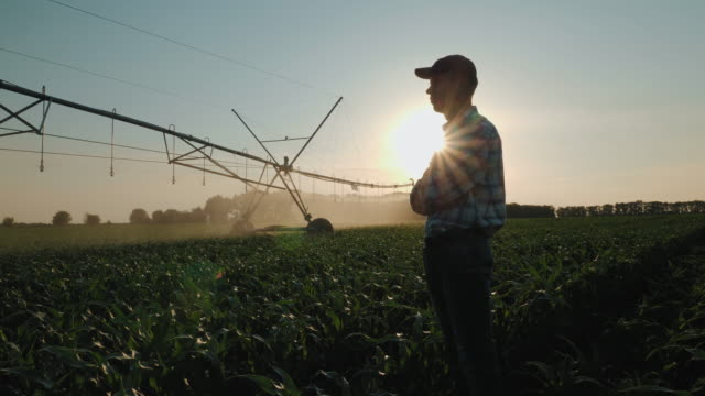 Farmer watching the irrigation cornfield
