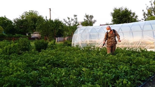 vidéos et rushes de l'agriculteur utilisant des vêtements protecteurs et masque pulvérise des produits chimiques sur des pousses de pomme de terre - herbicide