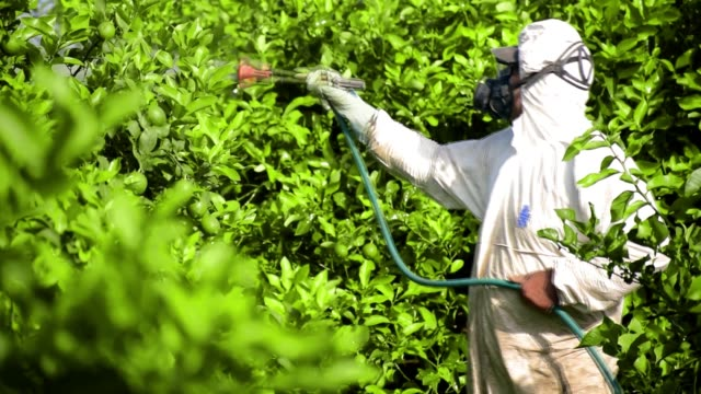 farmer wearing protective clothes spraying toxic pesticide and insecticide,on fruit lemon growing plantation. - insetticida video stock e b–roll