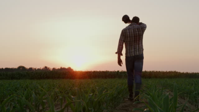 vídeos de stock e filmes b-roll de ws farmer wiping off sweat from forehead while walking on the field at sunset - farmer