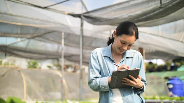 Farmer With A Digital Tablet Checking Organic hydroponic vegetable cultivation farm :agriculture technology