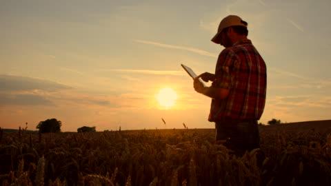 ws ds agricoltore con una tavoletta digitale nel campo - agricoltura video stock e b–roll