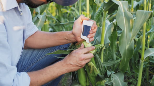 Farmer with a handheld digital device checks for nitrates harvest