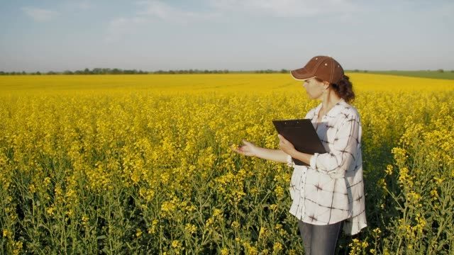 a farmer with a tablet in the field. - canola video stock e b–roll