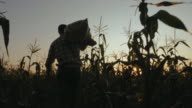 istock Farmer with bag of corn in the field 1194679833