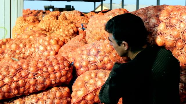 Farmer With Onion Harvest video