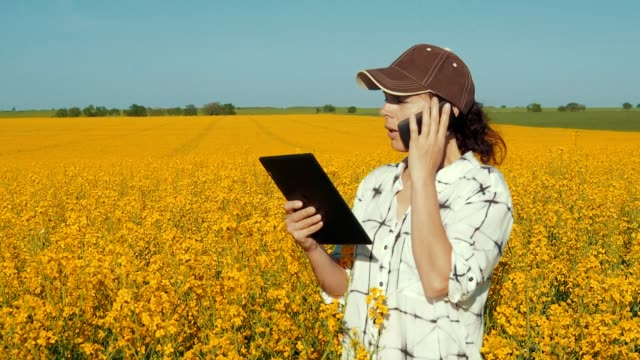 farmer with phone and tablet in the field. - canola video stock e b–roll