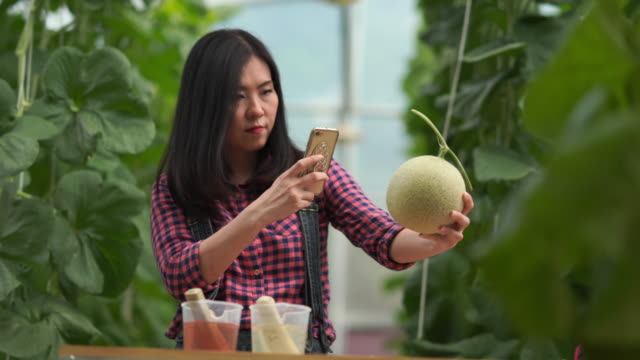 Farmer woman checking quality of melon hydroponic plants , plants growing in greenhouse supported , e-learning and e-commerce concept