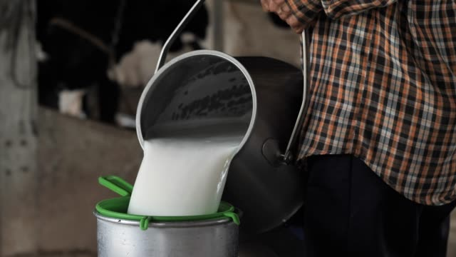 vídeos de stock e filmes b-roll de farmer woman pouring raw milk into container tank milking in dairy farm. career agriculture - ordenhar
