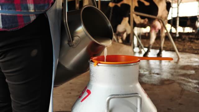 vídeos de stock e filmes b-roll de farmer woman pouring raw milk past filter dirt before into storage tank milking in dairy farm. career agriculture, farmer. cow's milk farm asia thailand. milking management procedure. slow motion - ordenhar