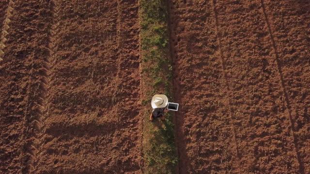 vidéos et rushes de femme de fermier avec la tablette numérique contrôlant le sol organique agriculture riz champ de blé de terrasse pendant une saison sèche d'été, vue aérienne - maïs culture