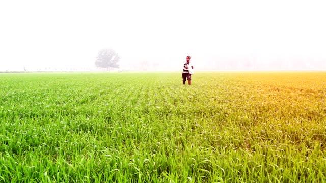Farmer working in the field of wheat video