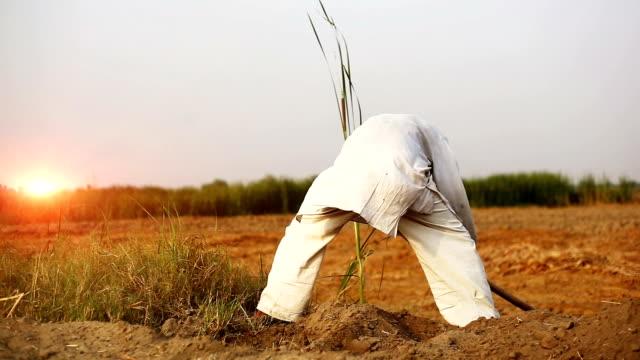 jordbrukare som arbetar i fältet hoe - haryana bildbanksvideor och videomaterial från bakom kulisserna