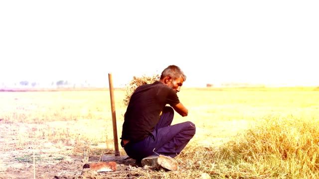 jordbrukare som arbetar i fältet - haryana bildbanksvideor och videomaterial från bakom kulisserna