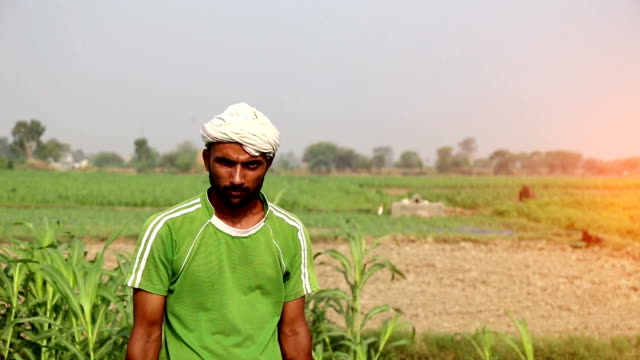 Farmer working in the field Young farmer working in the green field during springtime. haryana stock videos & royalty-free footage