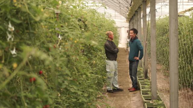 農家が話題のトマトの品質 ビデオ