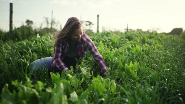 vídeos de stock e filmes b-roll de farmers are the backbone of any civilization - colher atividade agrícola