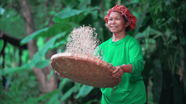 slo mo farmers are working on her farm. - tajlandia filmów i materiałów b-roll
