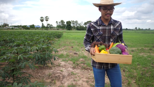 Farmers bring vegetable crates to deliver to customers. - video