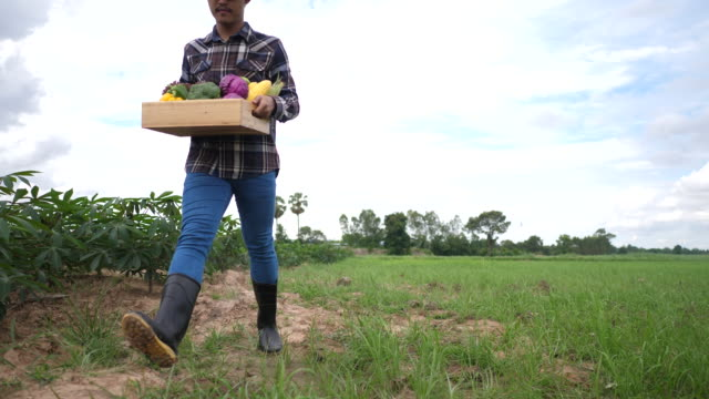 Farmers bring vegetables harvested to customers. video