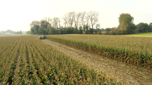 AERIAL Farmers Cutting Corn Silage video