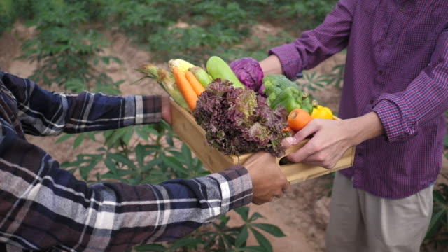 Farmers deliver organic vegetables to customers on their farms. - video