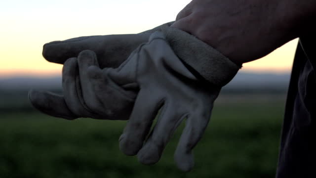 Farmers gloves Close up shot of a farmer putting on his gloves and sunrise glove stock videos & royalty-free footage