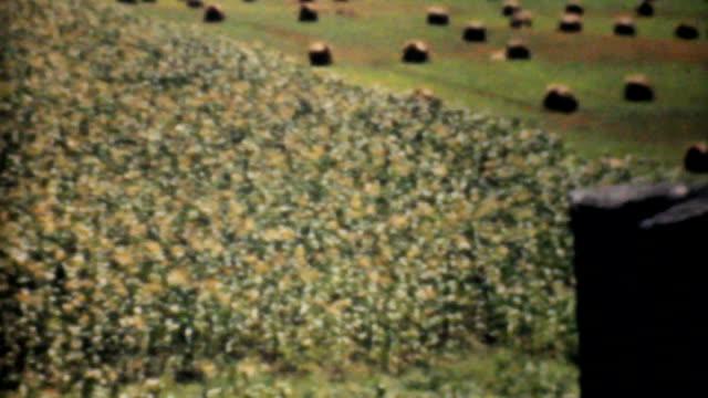Farmers Golden Wheat Field In The Fall-1940 Vintage 8mm film