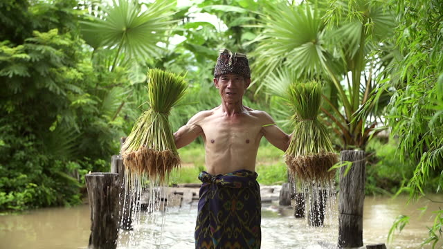 Farmers grow rice in the rainy season. He was soaked with water and mud to be prepared for planting. Farmers grow rice in the rainy season. He was soaked with water and mud to be prepared for planting. southeast stock videos & royalty-free footage