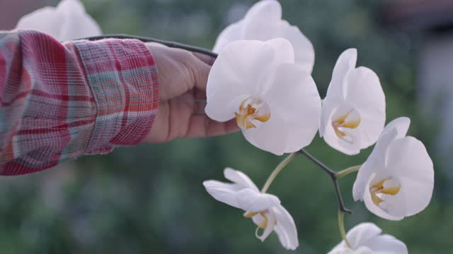 Farmer's Hand And White Orchid Slow Motion