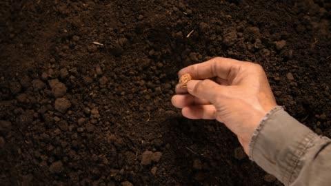 vidéos et rushes de main de l'agriculteur, planter des graines dans le sol - graine