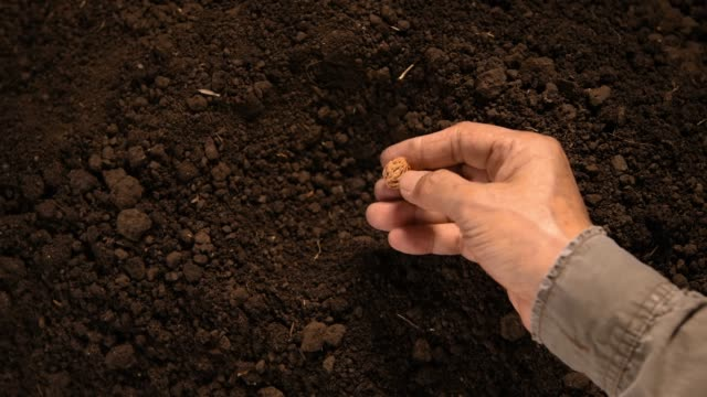 vídeos de stock e filmes b-roll de farmer's hand planting seed in soil - semente
